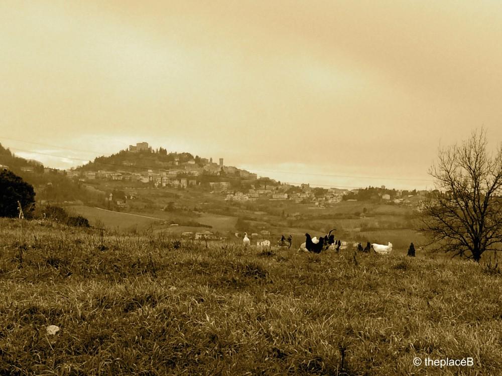 Bertinoro landscape