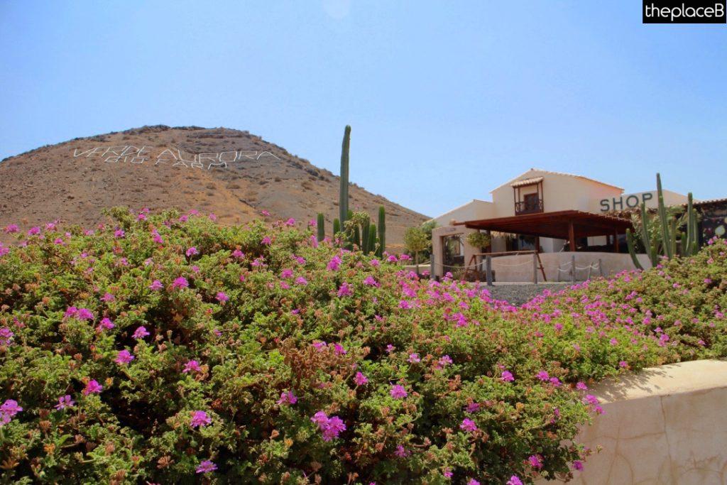 Fuerteventura Canarie Verde Aurora Bio